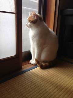 2012.11.4IMG_6701.jpg